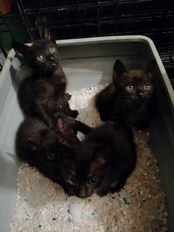 gatinhos bebés procuram dono que os ame