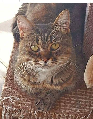 Продам красивую кошку