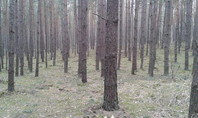 Sprzedam las sosnowy 10,27 ha