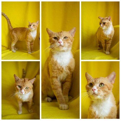 Уютный солнечный котик Фунтик, кот, 1,5 года, кастрирован