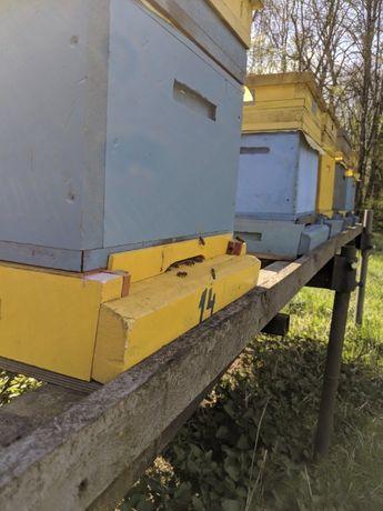 Sprzedam odkłady pszczele Pasieka Łazowscy