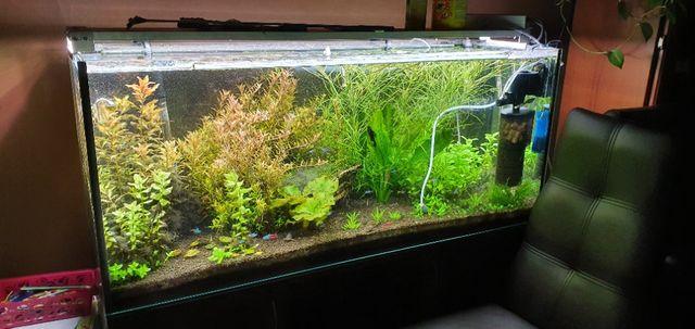 Rośliny akwariowe z przycinki Rotala Proserpinaca Pogostemon Bacopa