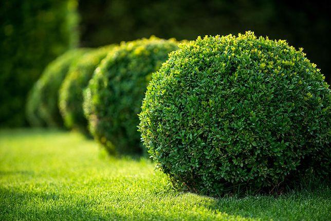 KOSZENIE TRAWY PRZYCINANIE TUI drzew krzewów pielęgnacja ogrodu
