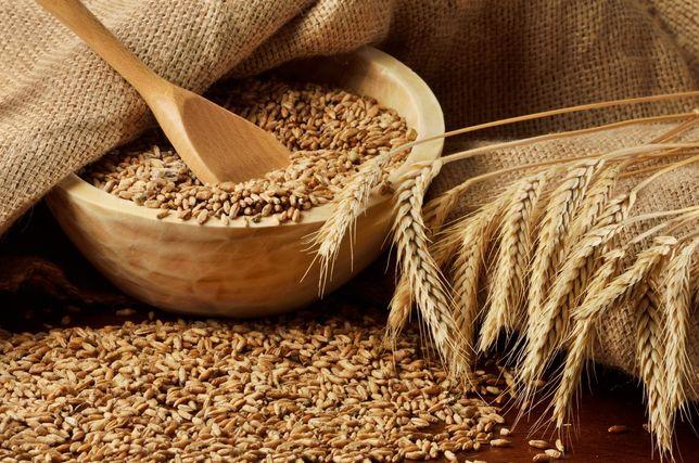 Продам пшеницу кукурузу