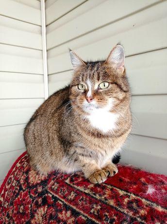 Крупная кошка в частный дом