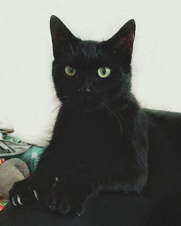 Великолепный черный кот ищет дом
