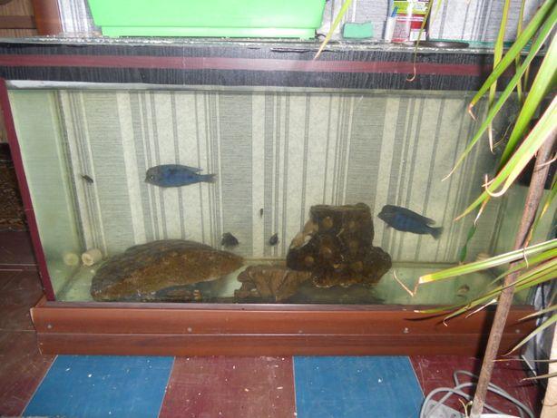 аквариумы с оборудованием