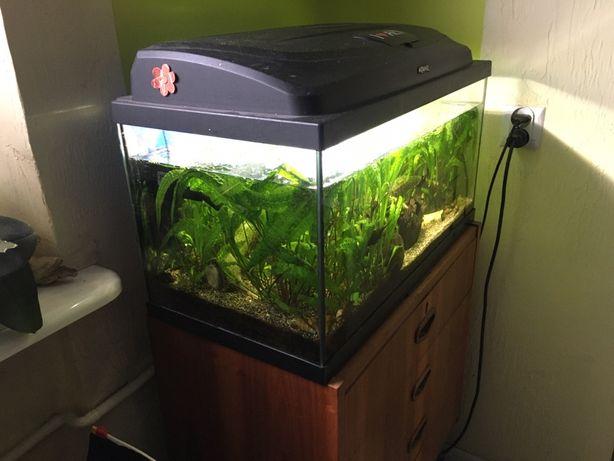 Akwarium 54l Aquael