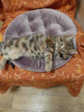 котенок девочка мышеловка 2,5 мес доставка бесплатная  по Одессе