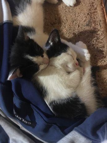 Котики шукають дім