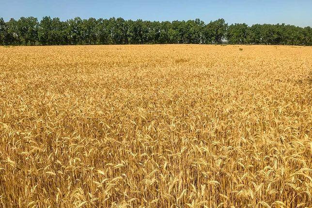 Земельный пай 9 гектар