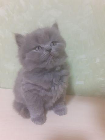 Котята, котёнок, котик