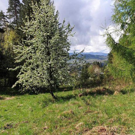 Widokowa działka z lasem
