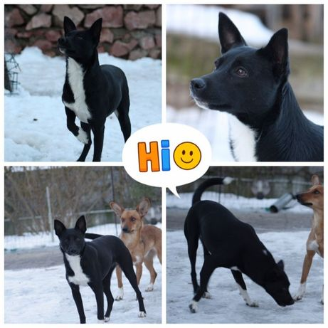 Пропала собака небольшая сука черно-белая, Макаровский район