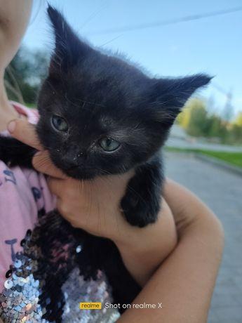 Терміново потрібний дім для кошеня!Хлопчик буде пухнастим вік 1місяць