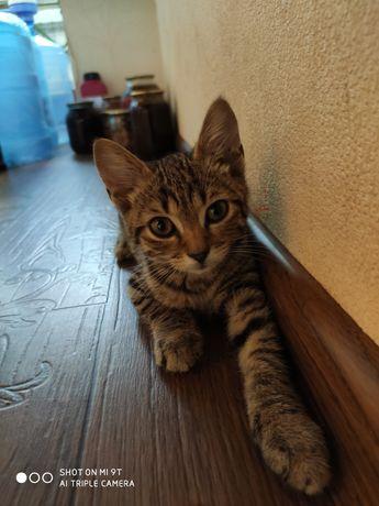 Умный и ласковый котенок, котик