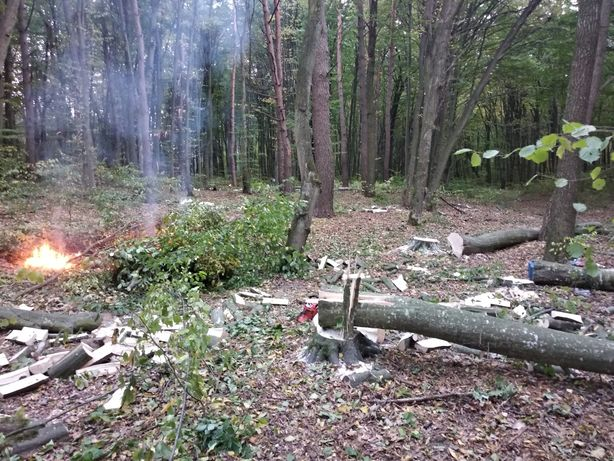 Зрізаємо дерева, зачистимо територію від заростей, зрізанн дерев за др