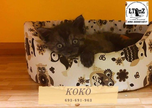 Koko czeka na Ciebie