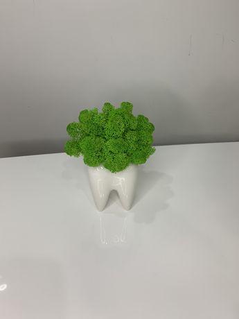 Кашпо зуб з стабілізованим мохом