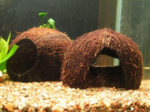 Кокосовий будиночок грот укриття риб(павуки, ящірки, жаби і т.д.)