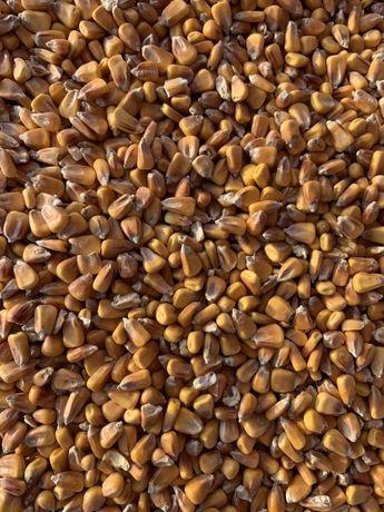 Kukurydza sucha, DON do 500 ppm