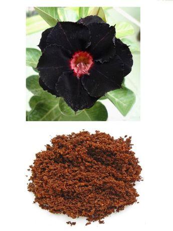 Кокосовый субстрат UGro Pure Basic для Адениума.. растений