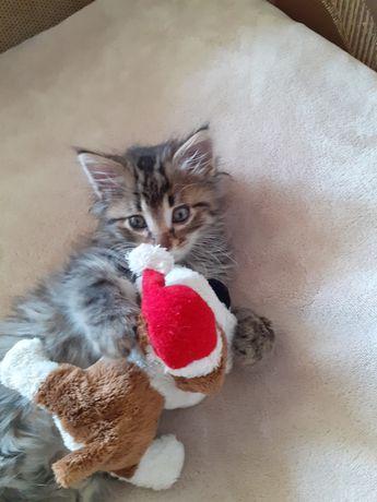 Котик у добрі руки