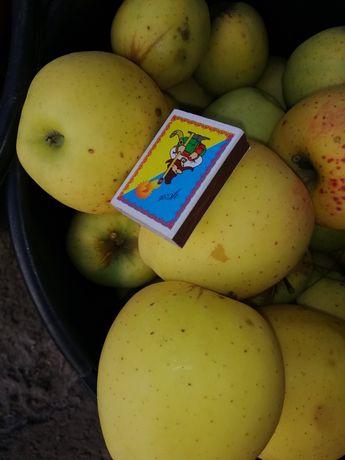 Продам яблоки разные