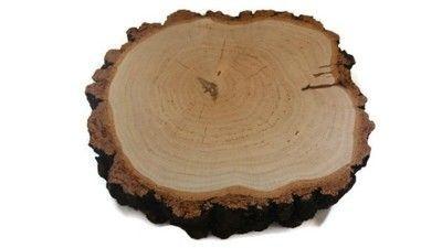 Duży Plastry drewna brzoza 38 cm gr.11cm na stolik