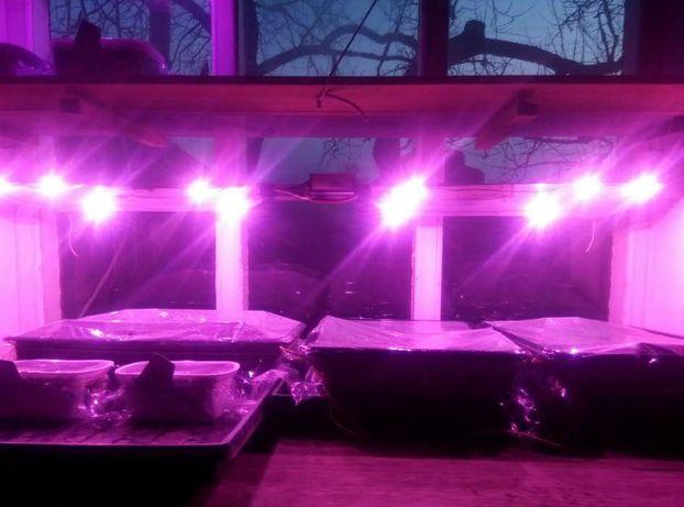 Семена табака и махорки - 120 сортов. (Насіння тютюну)