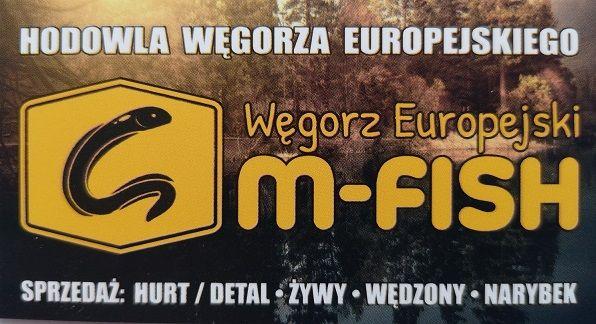 Sprzedam Węgorza Europejskiego z własnej hodowli.