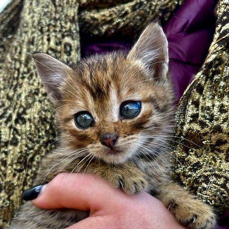 Миниатюрные Котята