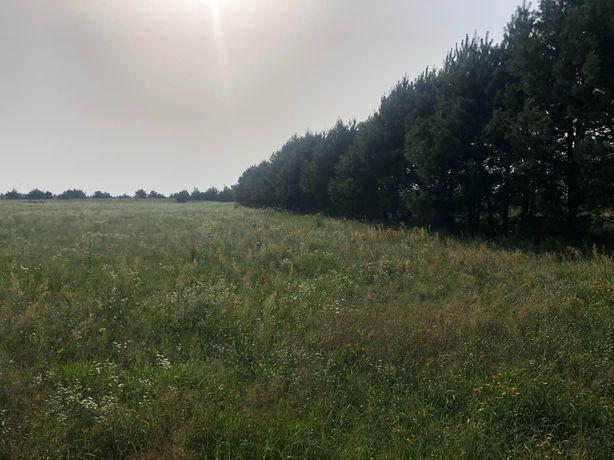 Земельна ділянка в Ясногородці.