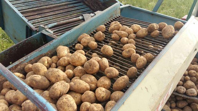 Ziemniaki jadalne VINETA wineta  15kg