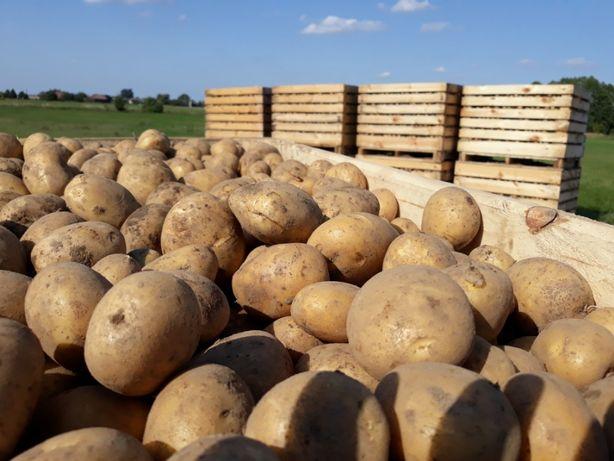 Pyszne ziemniak jadalne Bryza, Melodia, Noblesse wysoka jakość