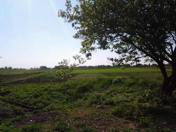 Земельный участок в экологически чистом месте. Одесское направление.