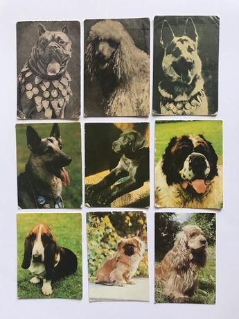 календарики животные, СССР
