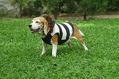 Doggy Dolly Kurtka Ubranko dla Psa z Kapturem M