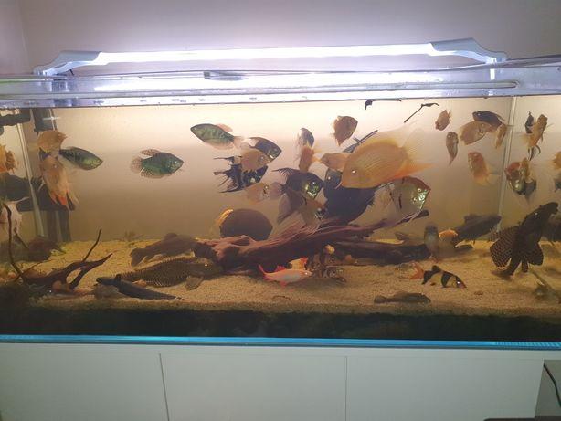 Sprzedam ryby z akwarium