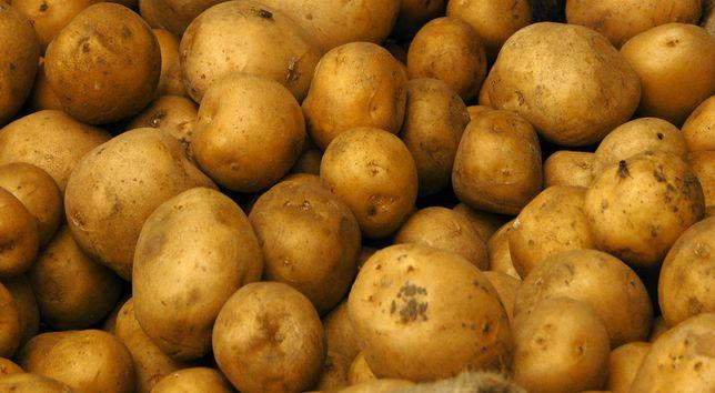 Ziemniaki worki 15 kg Młode Gala