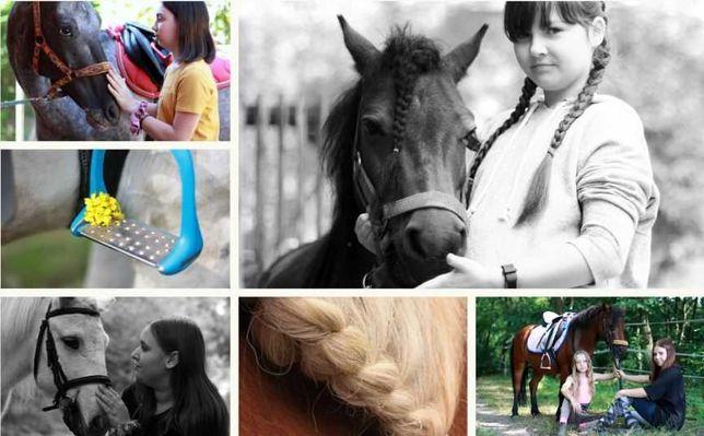 Koń klacz śląska zdjęcia