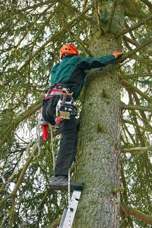Профессиональный спил деревьев любой сложности.Кронирование веток.