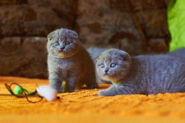 Котеи красотеи ласковые котики