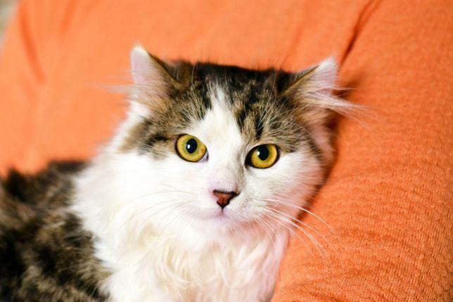 Симпатичный и ласковый молодой кот в поиске Человека! Марис, 5 мес