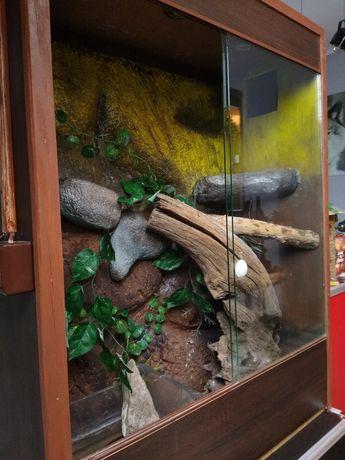 Terrarium dla Agamy błotnej ,kameleona 110x85x40