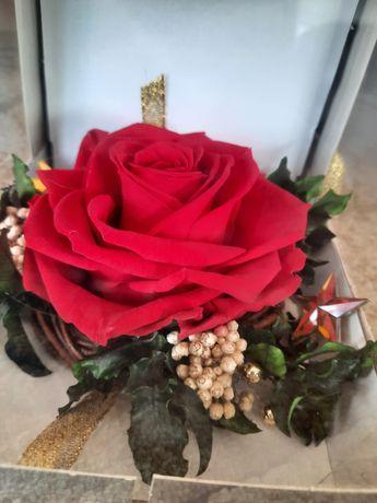 Róże stabilizowane wiecznie żywe- idealne na prezenty