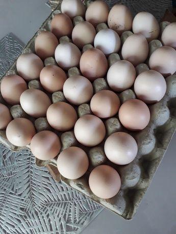 Sprzedam świeże jajka