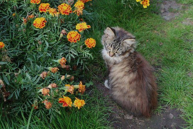 Котенок, кот, котята