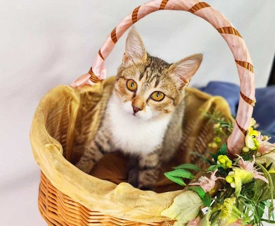 Крошка кошечка Жасмина 3 месяца котенок кицька