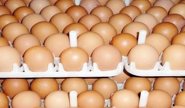 Инкубационное яйцо Бройлера Чехия